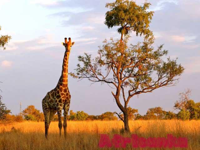 Животный мир Мозамбика