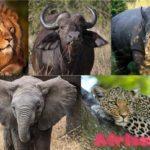 Большая Пятерка Африки