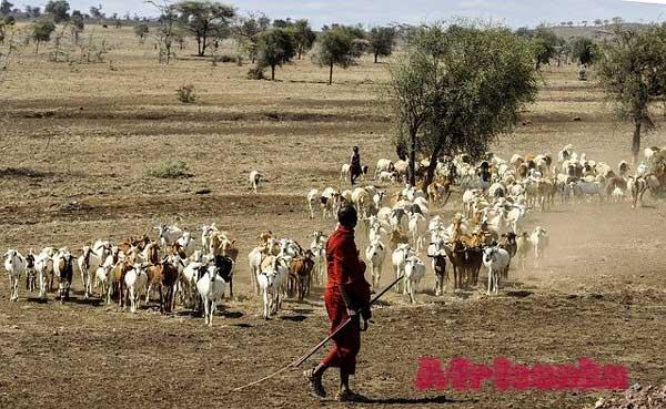 Натуральное хозяйство Масаи