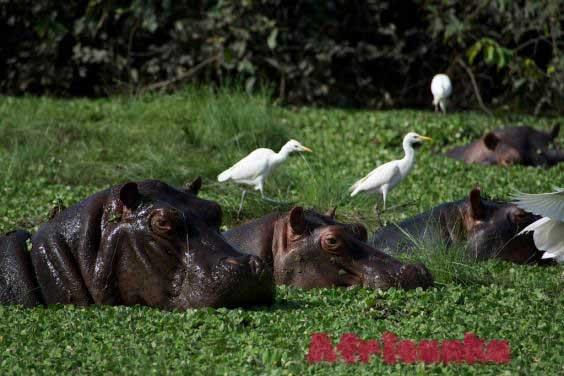 Животные Нигерии