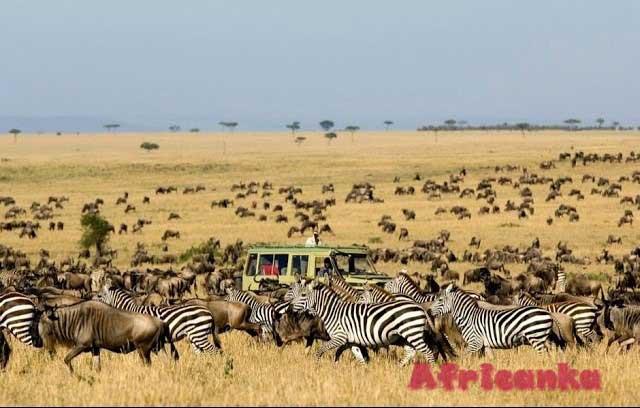 Национальный парк Серенгети и сафари