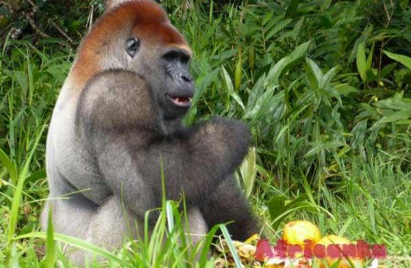 Животный мир Республики Конго