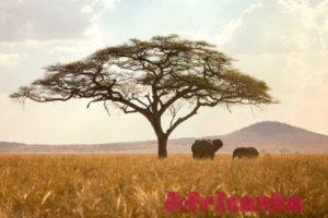 Национальный парк Серенгети в Танзании