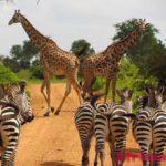Отдых в Танзании – 15 лучших мест для посещения