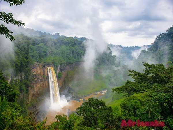 Камерун: растительная жизнь