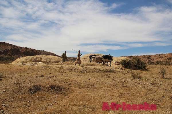 Эритрея: сельское хозяйство