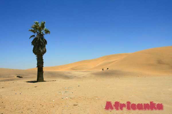 Пустыня Калахари – интересные факты