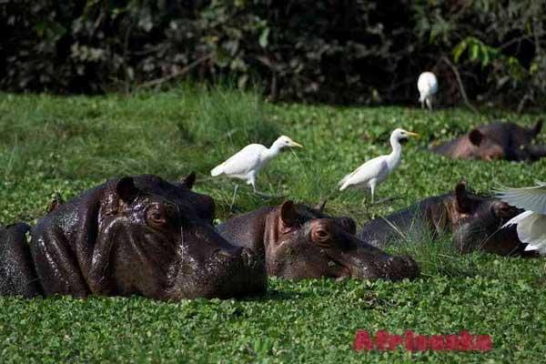 Растительная и животная жизнь Гвинея-Бисау