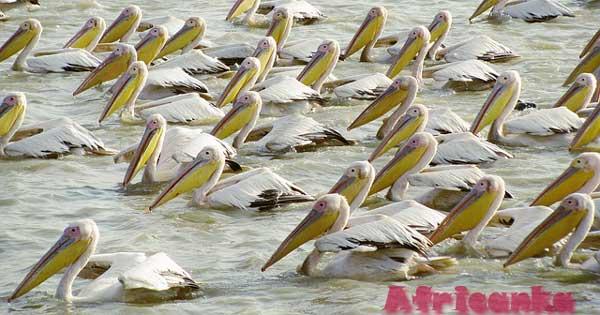 Животный мир Сенегала