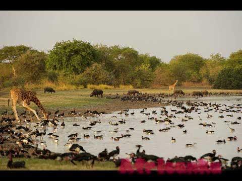 Животные Чада