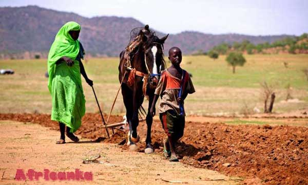 Чад: сельское хозяйство