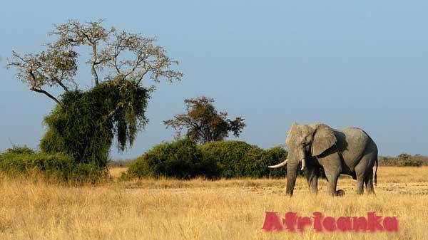 Ботсвана: климат