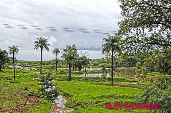 Гамбия: климат