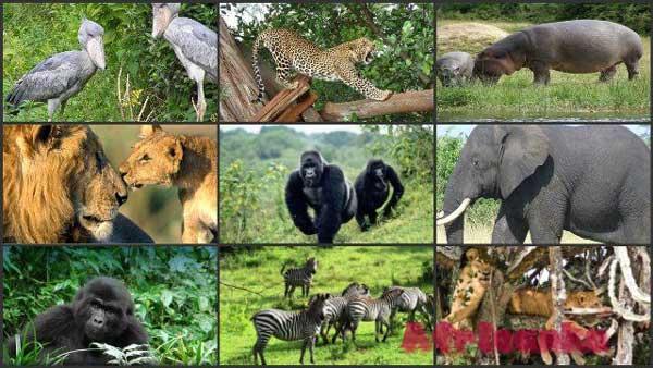 Дикие животные в Африке