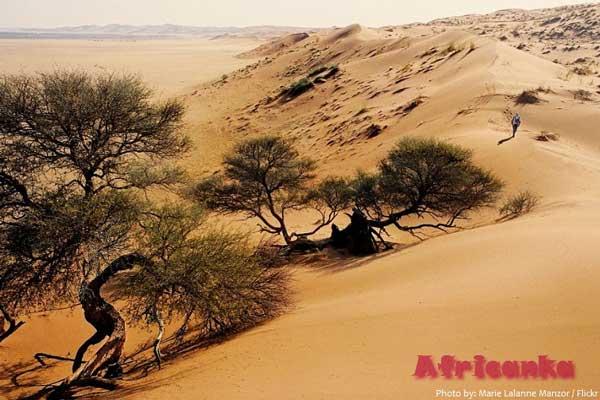 Пустыня Калахари - дюны