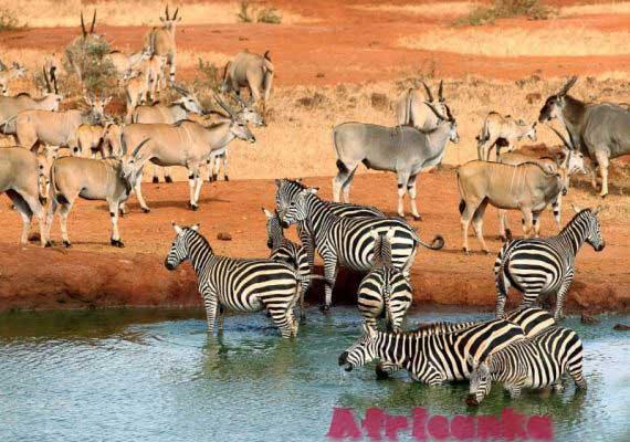 Лесото Животный мир