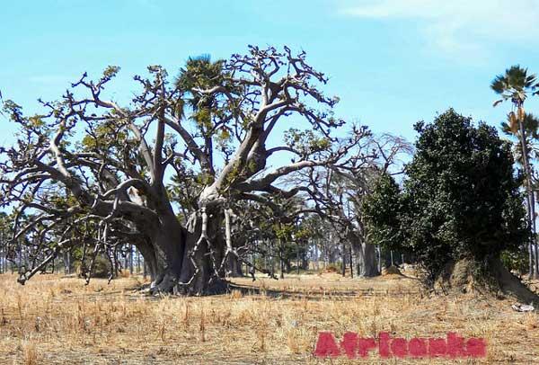 Сенегал Растительная жизнь