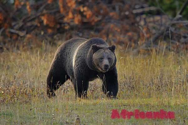 13. Положение о (несуществующих) медведях