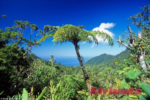 Коморские острова: растительный мир