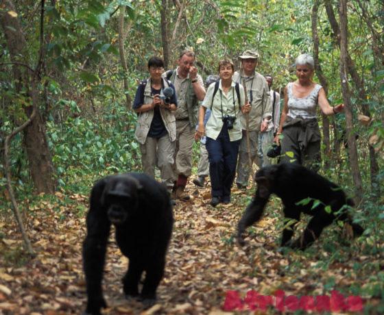 Национальный парк Махали Маунтинс, Танзания