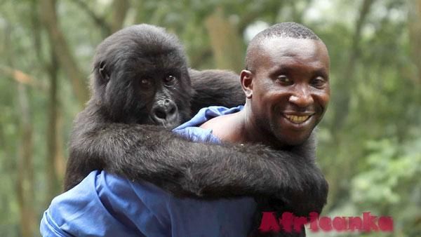 Национальный парк Вирунга, ДРК