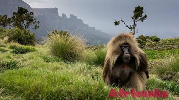 Национальный парк Сымен (Simien Mountains), Эфиопия
