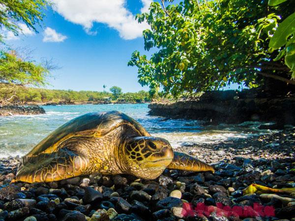 Коморские острова: животный мир