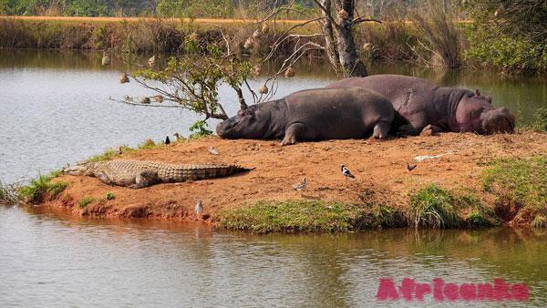 Животный мир парка Нгоронгоро