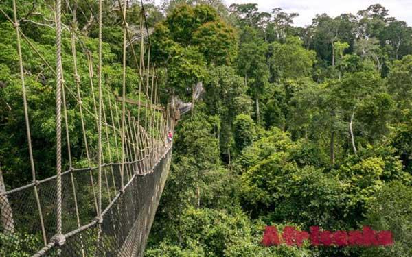 Национальный парк Какум в Гане