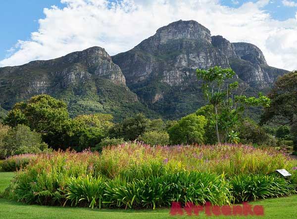 Сад Кирстенбош, Кейптаун