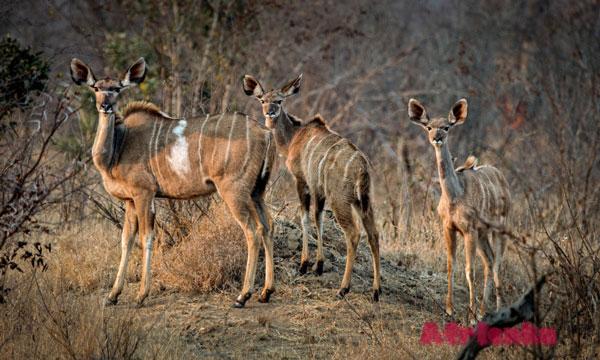 Животный мир Кот Дивуар