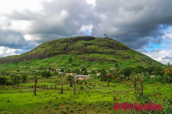 Кот-Д'Ивуар: Растительная жизнь