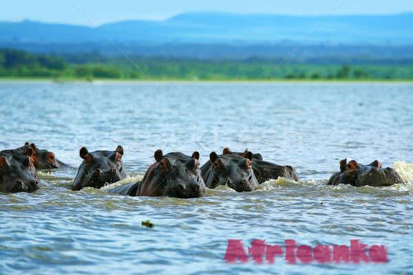 Животный мир озера Виктория