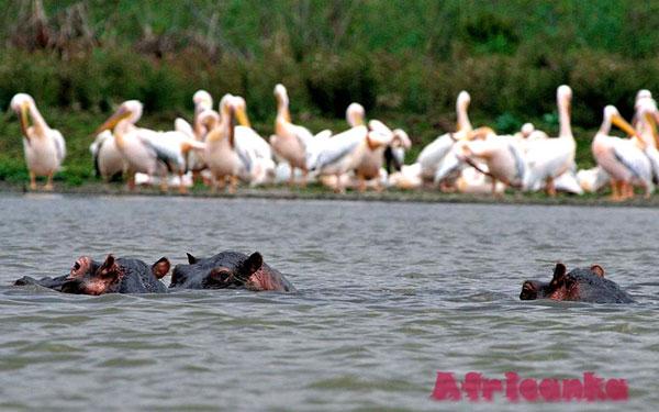 Озеро Виктория — это рай для птиц