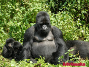 Где можно увидеть обезьян в Африке
