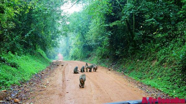 Национальный парк Кибале, Уганда