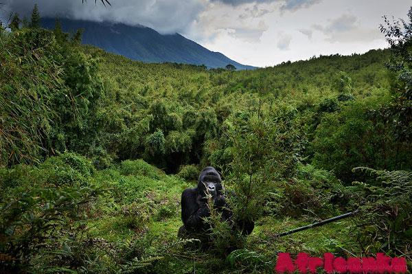 Национальный парк Вулканов, Руанда