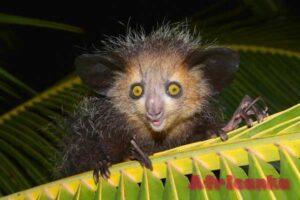 Топ-10 необычных животных Африки