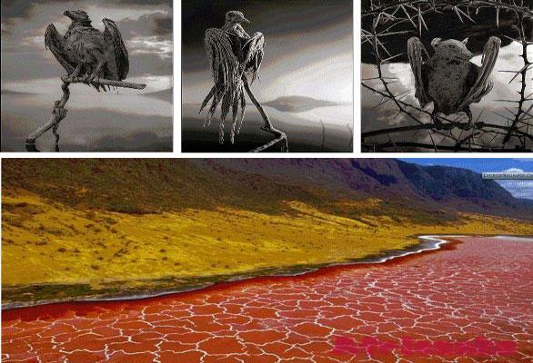 Озеро Натрон, которое превращает животных в камень