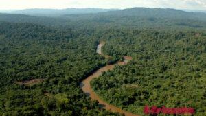 Тропический лес Конго