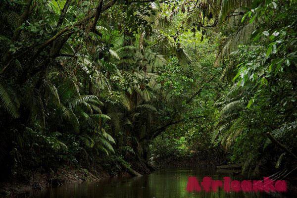 Тропический лес Конго – опасное место
