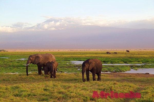 Экологические зоны Килиманджаро
