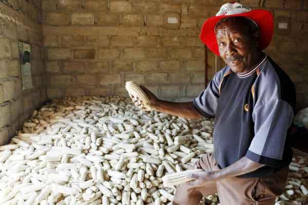 Сельское хозяйство Замбии
