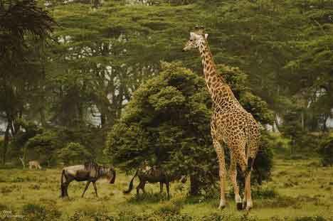 Южный Судан животные
