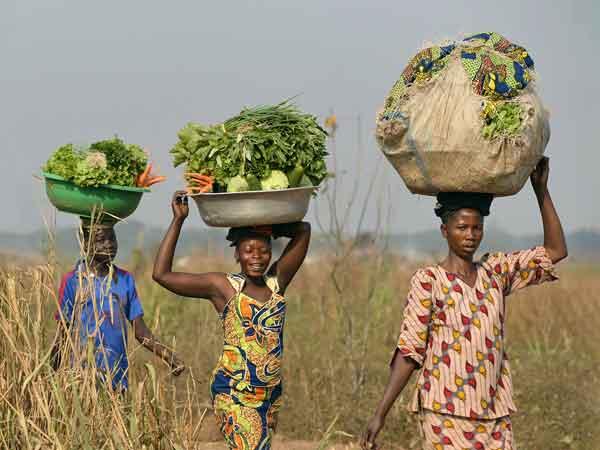 Сельское хозяйство Габон