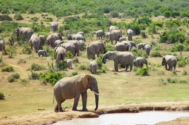 Национальный парк слонов Аддо, Южно-Африканская Республика