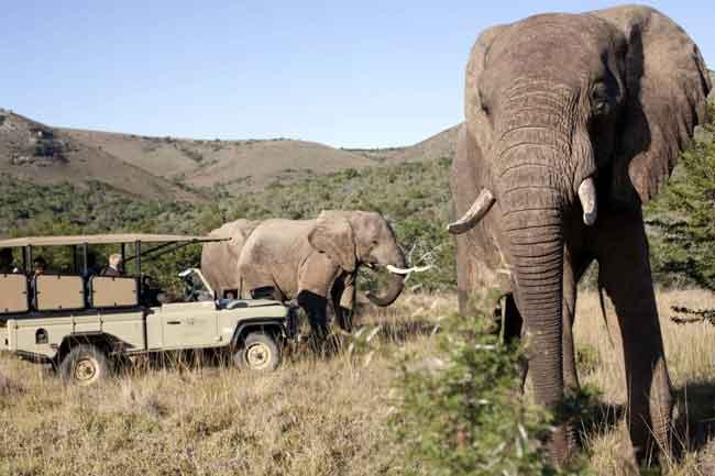 10 лучших национальных парков ЮАР