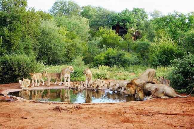 Национальный парк Крюгера, ЮАР