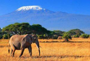 Список интересных фактов о Кении