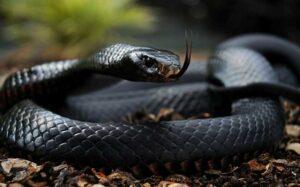 10 самых ядовитых змей в Африке